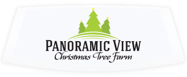 Panoramic View Christmas Tree Farm in Boone, NC